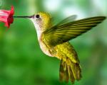 Hummingbirdlogo140906_edited-1